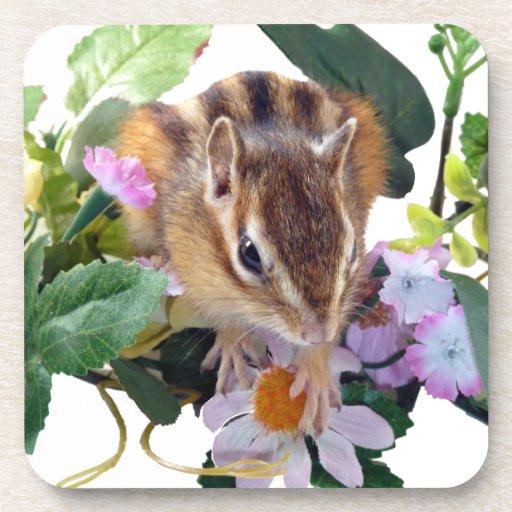 Chipmunk , Squirrel , Cork Coaster