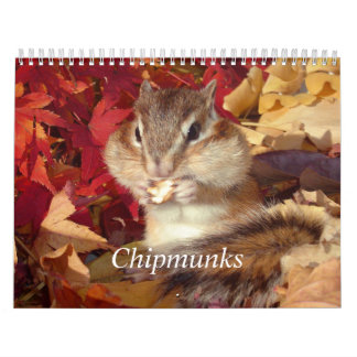 chipmunk, Squirrel, photo and calendar