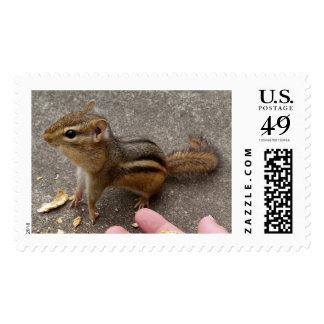Chipmunk Strikes A Pose Stamp