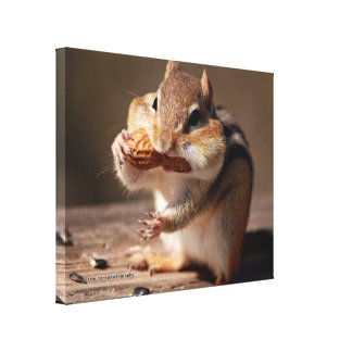 Chipmunk Stuffing His Face Canvas Print