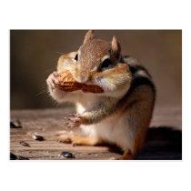 Chipmunk Stuffing His Face Postcard