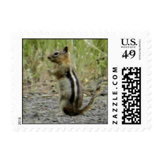 Chipmunk Timbres Postales