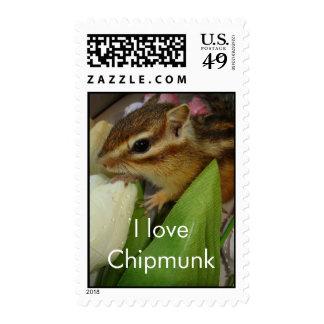 chipmunk & tulip