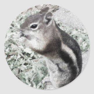 Chipmunk Up Close Classic Round Sticker