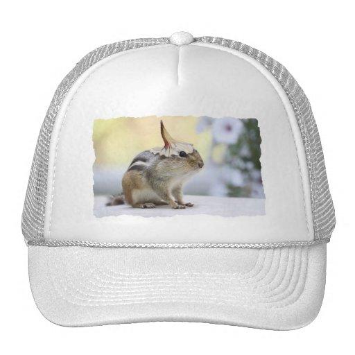 Chipmunk Wearing Flower Party Hat