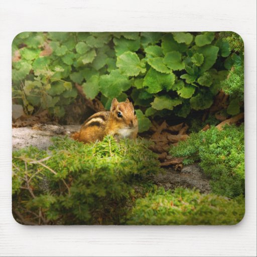 Chipmunk - What a cutie Mouse Pad