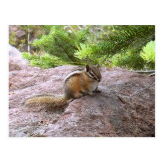 Chipmunk Wildlife Photo Art Design Nature Animals Post Card