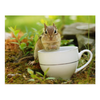 Chipmunk with Teacup Postcard