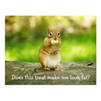 Chipmunk with treat postcard