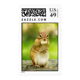 chipmunk with treat stamp