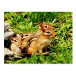 chipmunk y bebés de la madre tarjeta postal