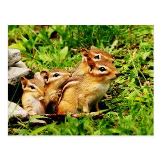 chipmunk y bebés de la madre tarjetas postales