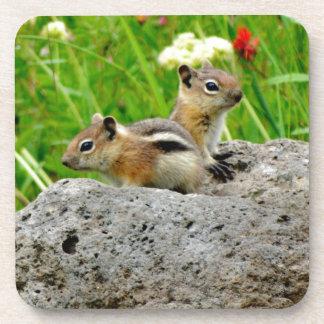 Chipmunks and wildflowers coaster