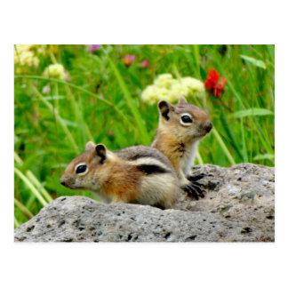 Chipmunks and wildflowers postcard