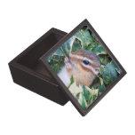 Chipmunks, caja de regalo cajas de joyas de calidad