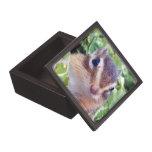 Chipmunks, caja de regalo cajas de regalo de calidad