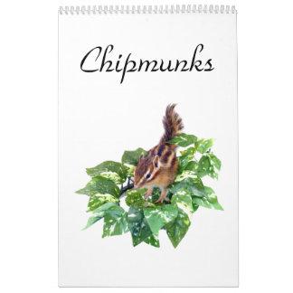 chipmunk's calendar (All countries)