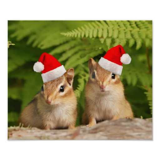 Chipmunks del bebé de Santa Posters