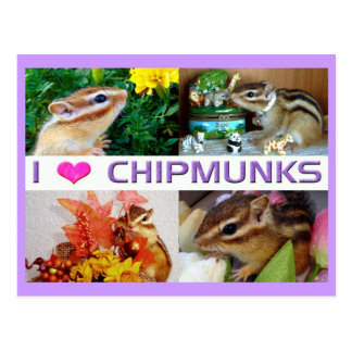 Chipmunks pohto postcard