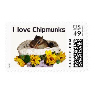 chipmunk's stamp