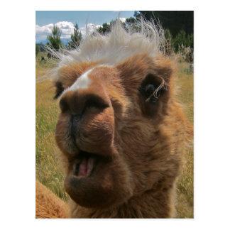Chipper Alpaca Postcard