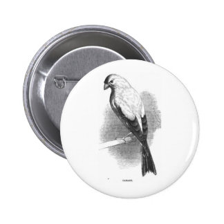 Chipper Canary Black and White Sketch Pinback Button