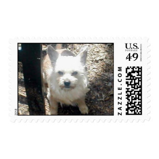 Chipper Postage