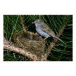Chipping Sparrow and two nestlings Print