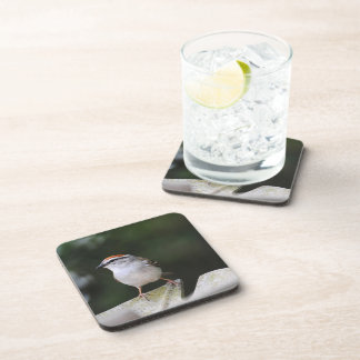 Chipping Sparrow Beverage Coaster