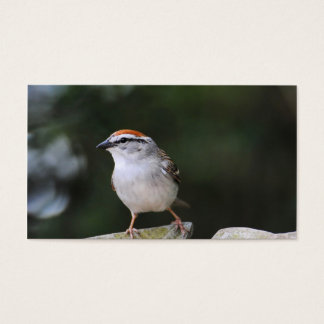 Chipping Sparrow Business Card