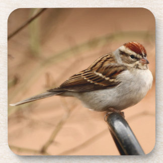 Chipping Sparrow Coaster
