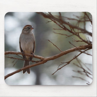 Chipping Sparrow in Crepe Myrtle Tree Mouse Pads