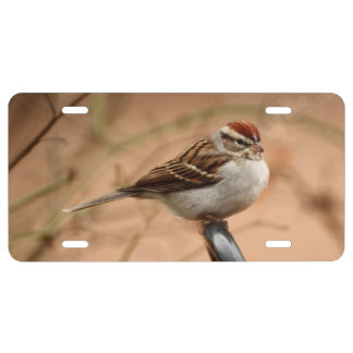Chipping Sparrow License Plate
