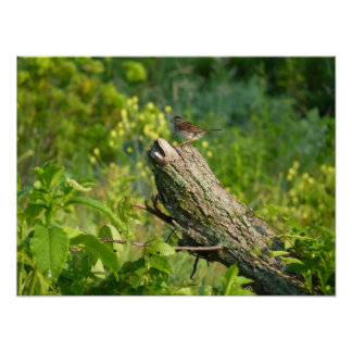 Chipping Sparrow on Bough Poster