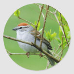 Chipping Sparrow on Branch Stickers