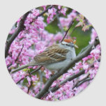 Chipping Sparrow on Dogwood Branches Stickers