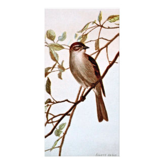 Chipping Sparrow Perching Photo Card