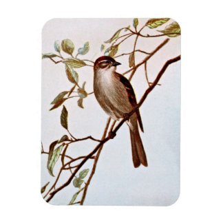 Chipping Sparrow Perching Rectangular Photo Magnet