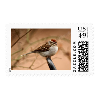 Chipping Sparrow Stamp