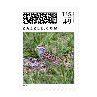 Chipping Sparrow Postage Stamps