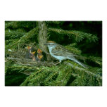 Chipping Sparrow with nest Poster