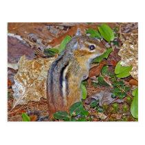 Chippy Cute Chipmunk Postcard