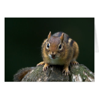 Chippy The Chipmunk Greeting Card