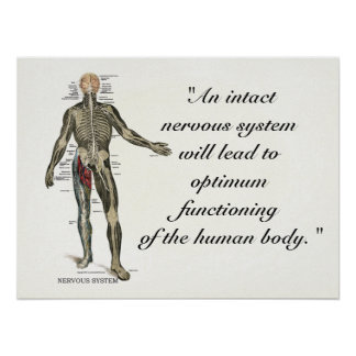 Chiropractic Health Quotes & Sayings Poster