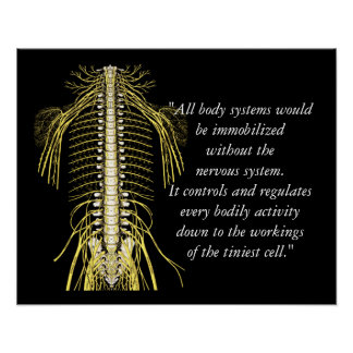 Chiropractic Quotes & Sayings Nerves Poster