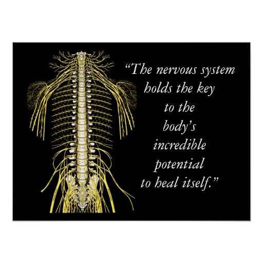 Chiropractic Quotes Amp Sayings Nervous System Poster