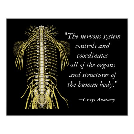 Chiropractic Sayings & Quotes Nerves Poster