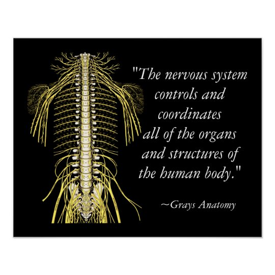 Quotes About People Who Notice: Chiropractic Sayings & Quotes Nerves Poster