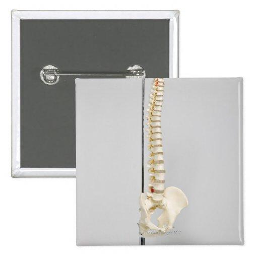 Chiropractic skeleton button