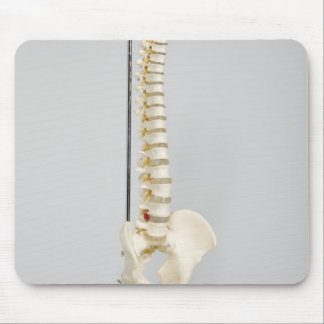Chiropractic skeleton mouse pad